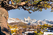 Fitz Roy range peaks with tree in autumnal landscape, El Chalten, Los Glaciares National Park, UNESCO World Heritage Site, Santa Cruz province, Argentina, South America