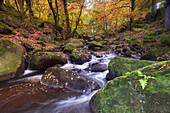 Flowing river and autumn colours at Padley Gorge, Peak District National Park, Derbyshire, England, United Kingdom, Europe