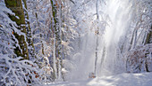 Sunny winter morning in the beech forest, Bavaria, Germany
