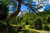 Auf dem Weg zur Sonnenspitze, Ehrwald, Tirol, Österreich