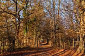 Late afternoon in November on the Andechser Höhenweg, Andechs, Upper Bavaria, Bavaria, Germany