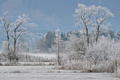 Hoarfrost morning at the Staffelsee, Uffing, Upper Bavaria, Bavaria, Germany