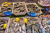 Fresh oysters in Cancale, Brittany, France