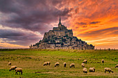 Mont Saint Michel, sunset and sheep on pasture, UNESCO World Heritage Site, Normandy, France