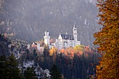 View of Neuschwanstein Castle, Allgäu, Swabia, Bavaria, Germany