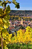 Vineyards near Sommerhausen am Main with a view to Würzburg, Lower Franconia, Bavaria, Germany