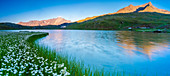 Panoramic of Monte Gavia mirrored in Lago Bianco surrounded by cotton grass, Gavia Pass, Valfurva, Valtellina, Lombardy, Italy, Europe