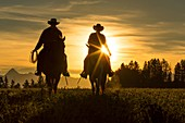 Two cowboys riding into the sunset across grassland with moutains behind, British Colombia, Canada.