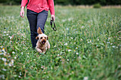 Woman walking in meadow with fawn coated young Cavapoo.