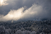 Cloud-shrouding snow-covered coniferous forest in the morning light, Krün, Bavaria, Germany.
