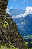 Several people stand on Cliff Walk with a view of Fiescherhorn, Tissot Cliff Walk, First, Grindelwald, Bernese Oberland, UNESCO World Natural Heritage Swiss Alps Jungfrau-Aletsch, Bernese Alps, Bern, Switzerland