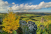 Autumnal discolored birch with a deep view from the Papststein, Papststein, Saxon Switzerland National Park, Saxon Switzerland, Elbe Sandstone, Saxony, Germany