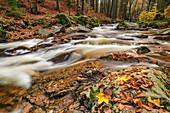 Bachlauf mit Herbstlaub, Ilsetal, Brocken, Nationalpark Harz, Harz, Sachsen-Anhalt, Deutschland