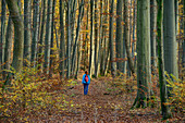 Woman hiking goes through autumn forest, Hainich National Park, Thuringia, Germany