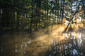 Sunrise with fog and sunbeams on the water, Germany, Brandenburg, Spreewald
