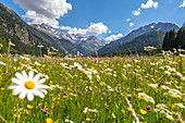 Summer wildflower meadow in the German Alps, Germany, Bavaria, Oberallgäu