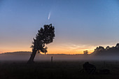 Comet NEOWISE is photographed in front of a bony old tree on a foggy meadow, Germany, Brandenburg, Spreewald