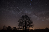 Old, leafless tree in front of a cloudless starry sky, Germany, Brandenburg, Spreewald