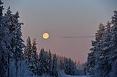 Winter landscape with a full moon in the morning, Storuman, Västerbottens Län, Sweden