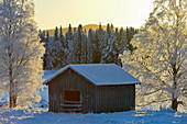 Wooden hut with birch trees full of ice in winter light, Mellanström, Lapland, Sweden