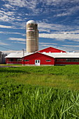 Red Farm in a cornfield, Quebec, Canada