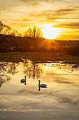 Sonnenuntergang am Schenkensee bei Dornheim, Iphofen, Kitzingen, Unterfranken, Franken, Bayern, Deutschland, Europa