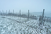 Winter in the vineyards near Krassolzheim, Sugenheim, Neustadt an der Aisch, Middle Franconia, Franconia, Bavaria Germany, Europe