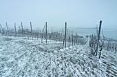 Winter in den Weinbergen bei Krassolzheim, Sugenheim, Neustadt an der Aisch, Mittelfranken, Franken, Bayern Deutschland, Europa