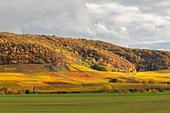 Vineyards in the southern Steigerwald, Weinparadies, Seinsheim, Huettenheim, Lower Franconia, Franconia, Bavaria, Germany, Europe