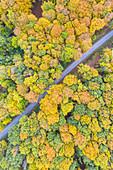 Kreisstrasse in the Steigerwald Nature Park, Abtswind, Kitzingen, Lower Franconia, Franconia, Bavaria, Europe