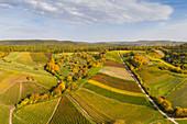 Vogelsang vineyards in the southern Steigerwald, Markt Einersheim, Iphofen, Kitzingen, Lower Franconia, Franconia, Bavaria, Germany, Europe