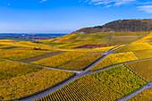The Julius Echter Berg vineyard in Iphofen, Kitzingen, Lower Franconia, Franconia, Bavaria, Germany, Europe