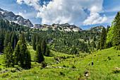 Abstieg vom Lösertaljoch durch das Lösertal mit Blick auf Scheinbergspitze und Lösertalkopf, Ammergauer Alpen, Bayern, Deutschland, Europa