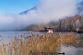 Novembermorgen am Kochelsee, Kochel am See, Oberbayern, Bayern, Deutschland, Europa