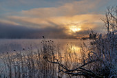 Sunrise on a frosty morning at the Staffelsee in November, Uffing, Upper Bavaria, Bavaria, Germany