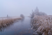 Small canal in the morning mist in Kochelmoos, Kochel am See, Upper Bavaria, Bavaria, Germany, Europe