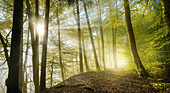 Morning sun in the forest in springtime, Bavaria, Germany, Europe