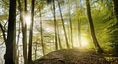 Morgensonne im Wald im Frühling, Bayern, Deutschland, Europa