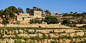 Gardens outside Valletta, Malta, Mediterranean, Europe