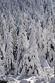 Exceptional fairytale landscape on the Feldberg, Taunus, Hesse, Germany.