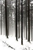Winter forests below the Feldberg, Taunus, Hesse, Germany.
