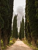 Cypress avenue in Chianti, Tuscany, Italy