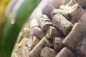 Wine corks behind glass, Tuscany, Italy