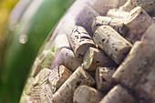 Wine corks behind glass, Tuscany, Italy