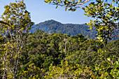 Rainforest of Ranomafana, Ranomafana National Park, Madagascar, Africa