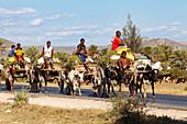Zebu carts near Tulear, Madagascar, Africa