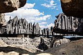 Karst landscape Tsingy de Bemaraha, Tsingy-de-Bemaraha National Park, Mahajanga, Madagascar, Africa