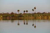 Gambia; Central River Region; Gambia River near Kuntaur; View of the west bank; Shady hut and stop for the ferry boat