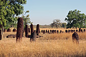 Gambia; Central River Region; Stone circles near Wassu; consisting of about 200 megaliths;