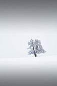 Lonely tree in winter, Ennstal, Upper Austria, Austria.